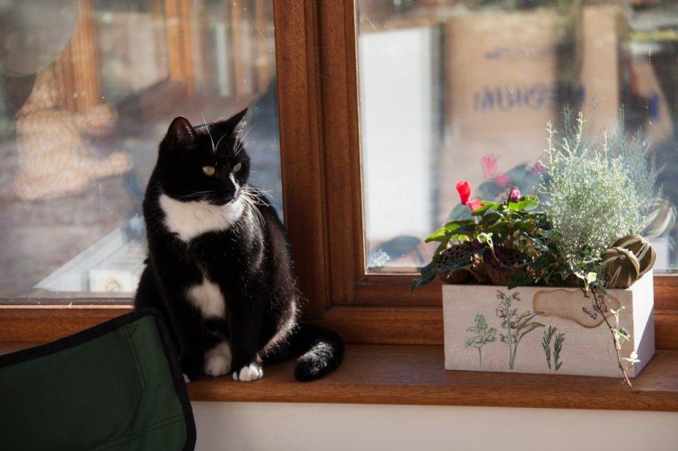 Кошка на подоконнике фото