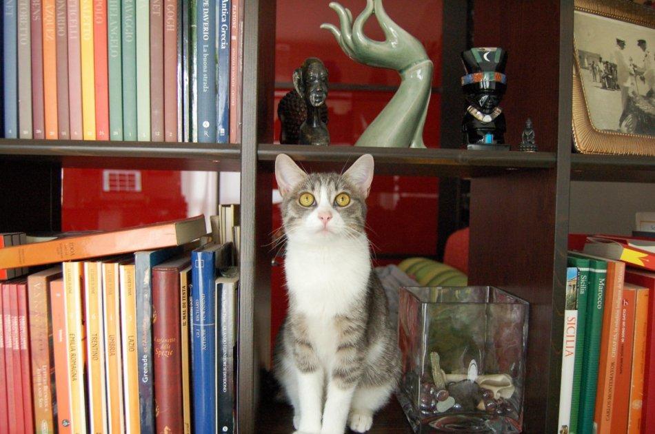 Кошка на книжной полке фото