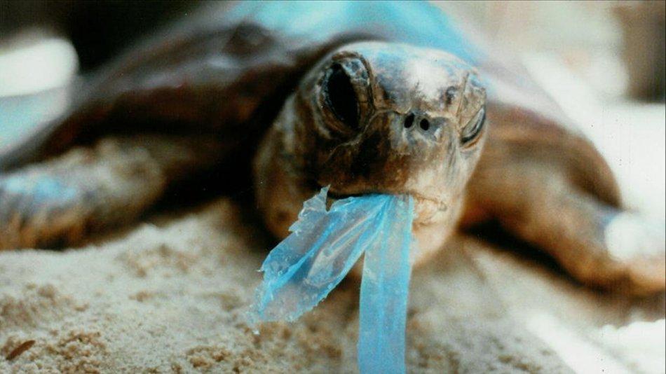 Черепаха ест воздушный шар фото