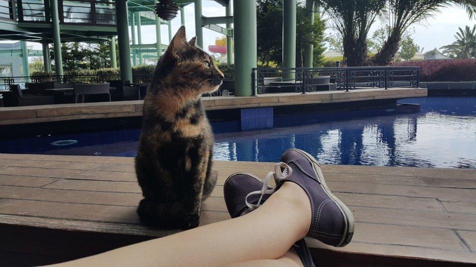Кошка сидит рядом с человеком фото