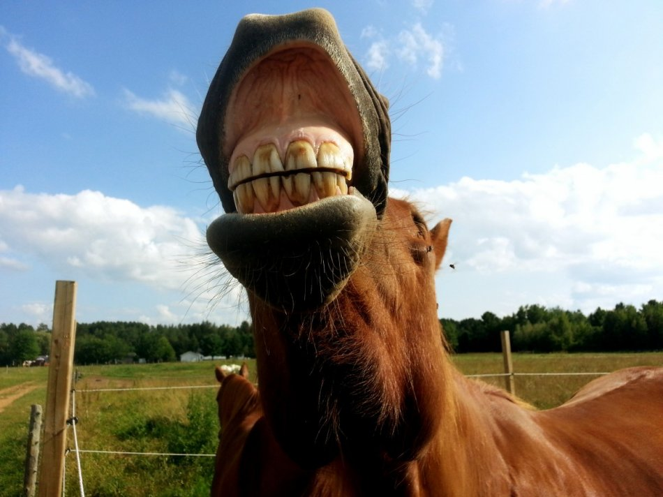 Лошадь улыбается флемует фото