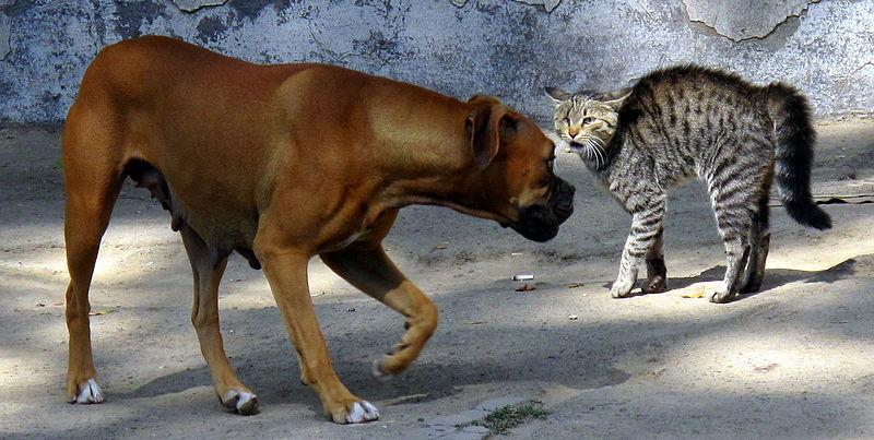 Собака и кошка не понимают друг друга фото