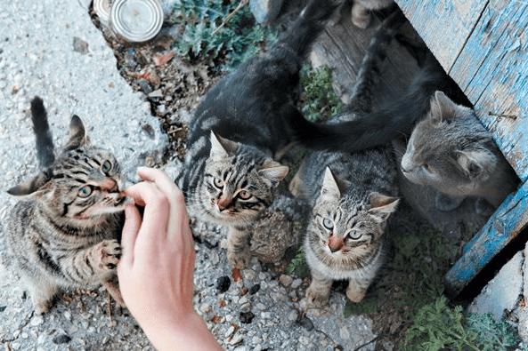 коты,кошки,домашние питомцы