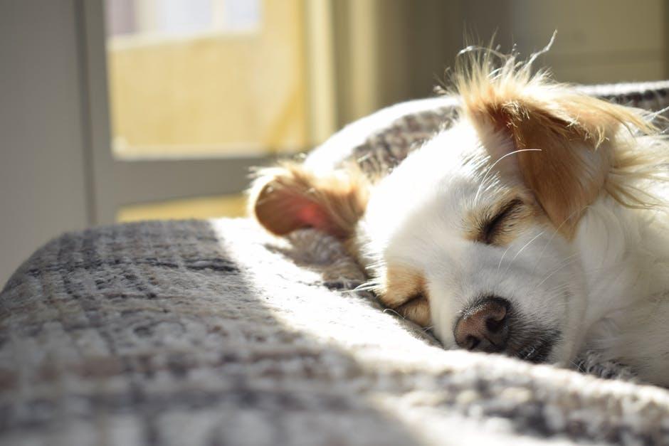 Собака спит фото