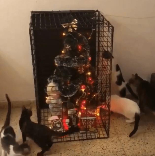 ёлка,кошки,питомцы,домашние животные,новый год