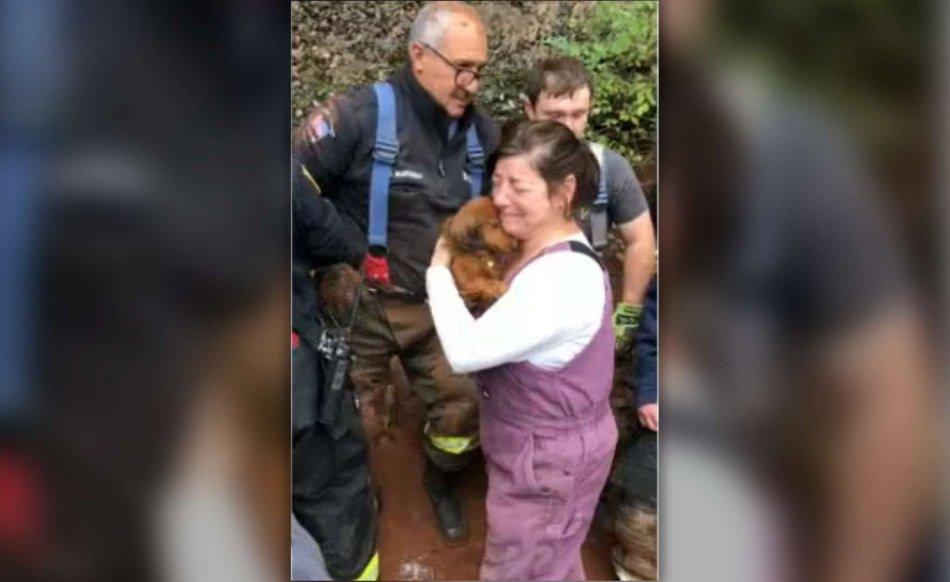 такса,собака,спасательная операция
