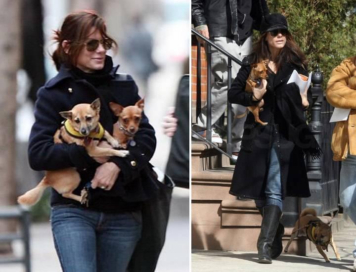 Сандра Баллок и ее собаки фото