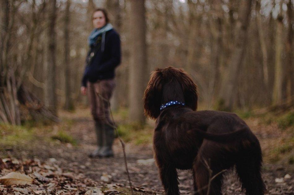 Человек и собака в лесу фото