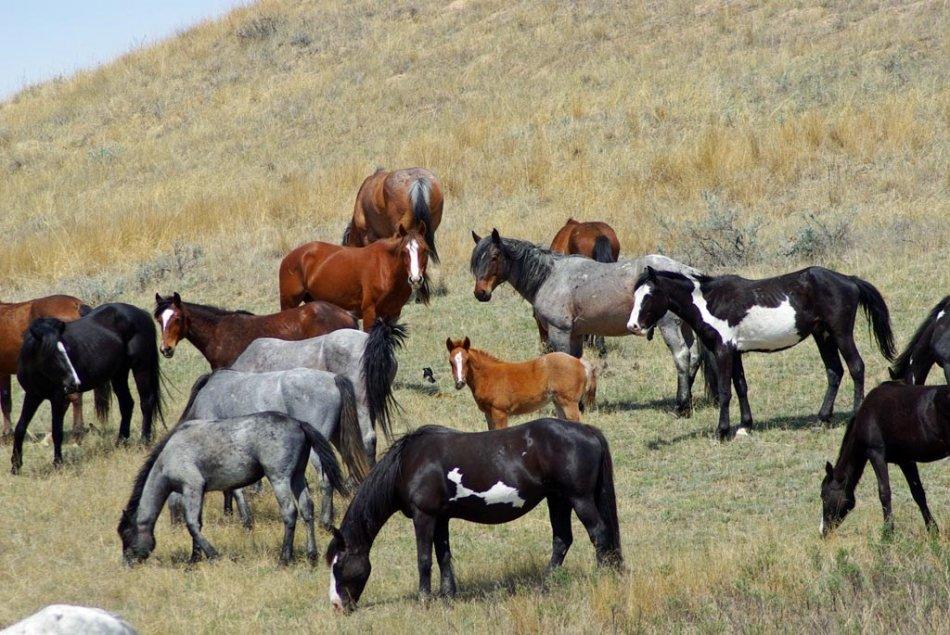 Лошади пасутся фото