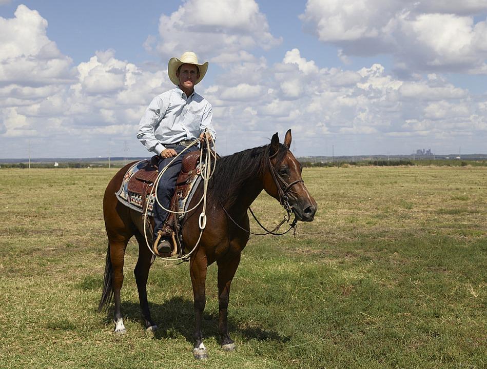 Ковбой на гнедой лошади породы квотерхорс фото