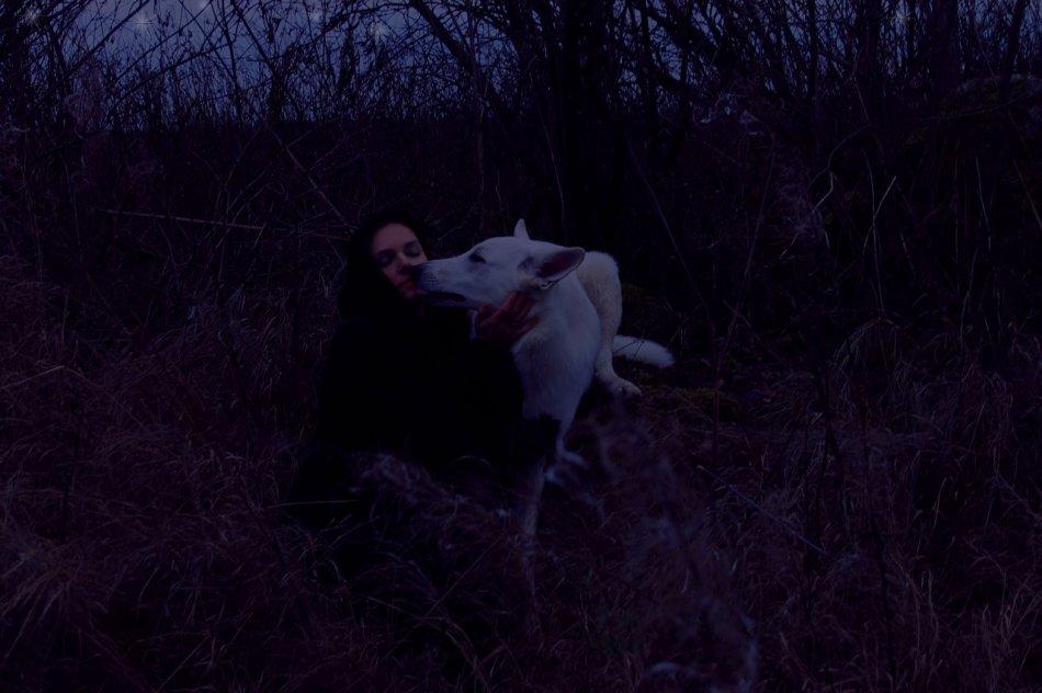 Белая швейцарская овчарка в ночном лесу фото