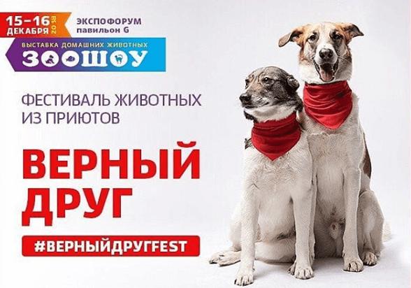 Фестиваль животных из приютов «Верный друг»
