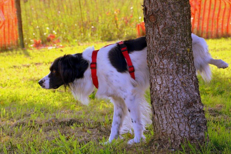 Собака метит дерево фото