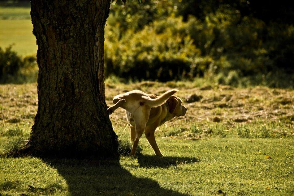 Собака писает на дерево фото