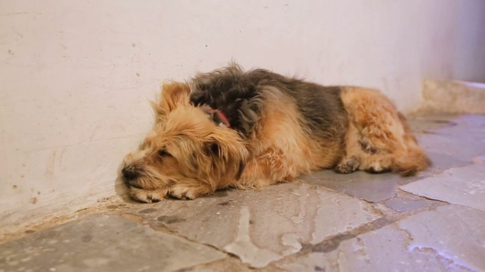 Бездомная собака спит на улице фото
