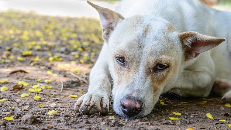 Несчастная собака фото