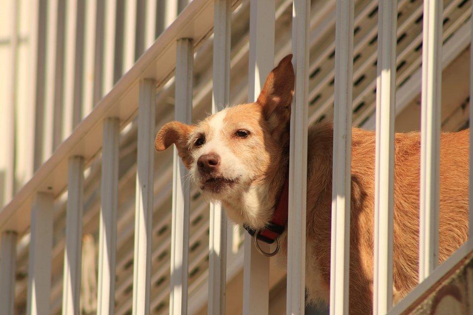 Собака смотрит сквозь перила лестницы фото