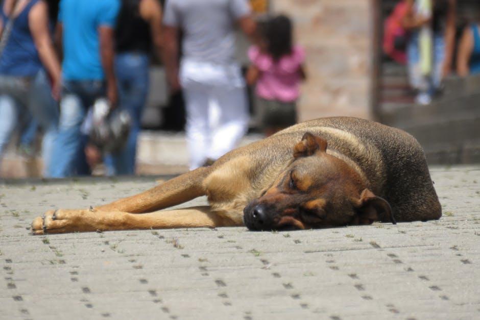 Дикая собака спит на улице фото