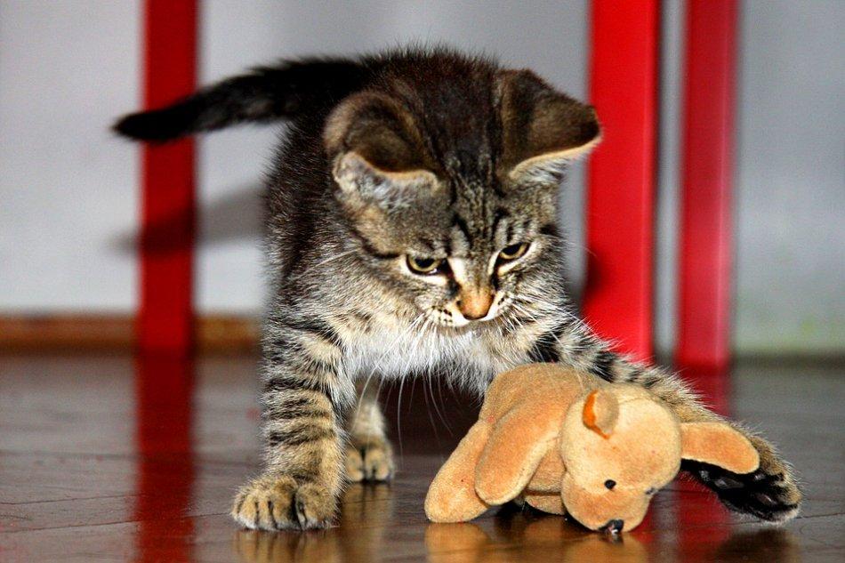 Полосатый котенок играет с плюшевой игрушкой фото