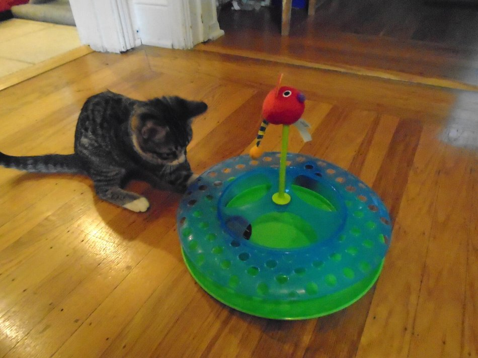 Игрушка-головоломка для кошки фото