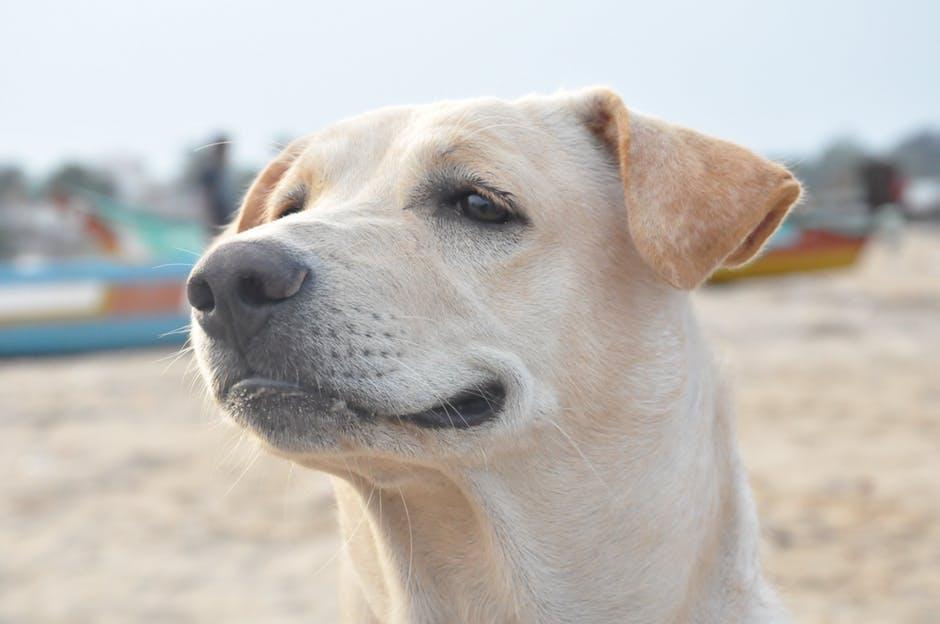 Бездоманая собака фото