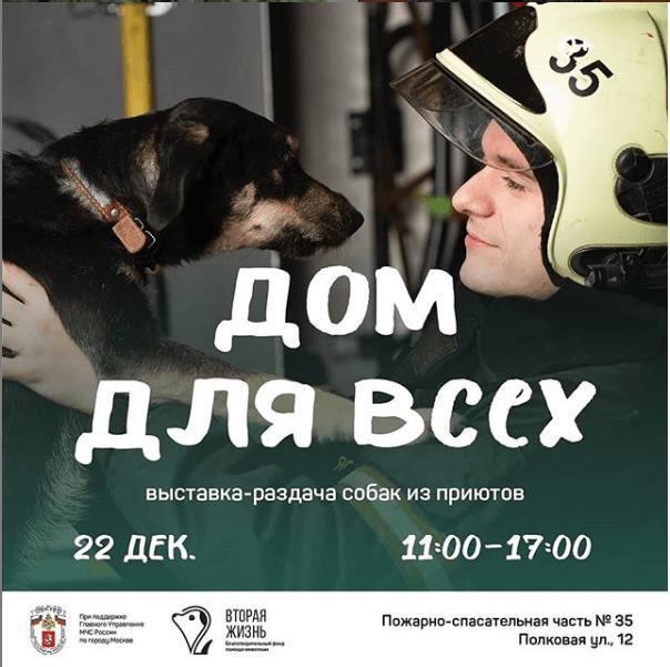 Дом для всех — выставка- раздача собак из приютов