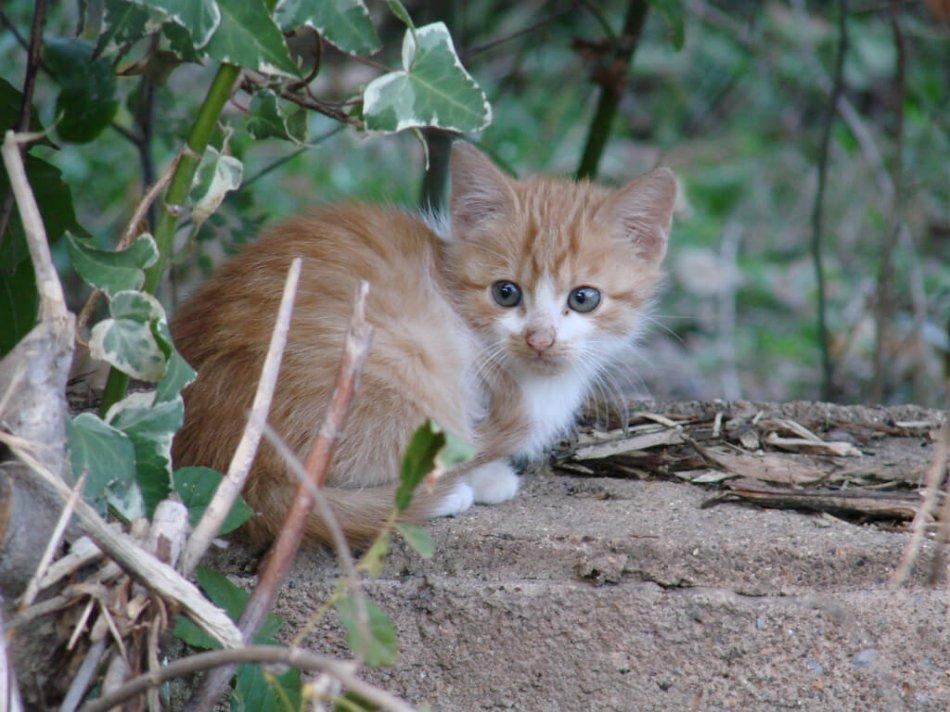 Рыжий бездомный котенок прячется фото