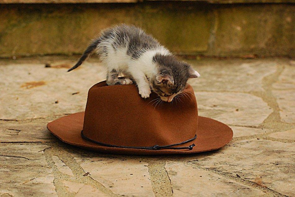 Котенок на шляпе фото