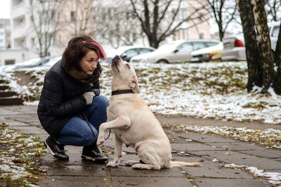 Лабрадор и девушка на улице зимой фото