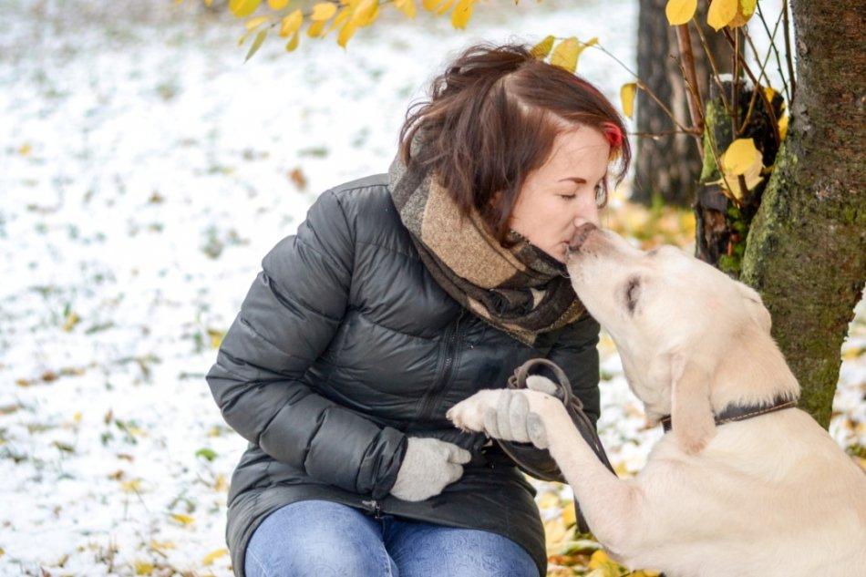 Лабрадор целует человека фото