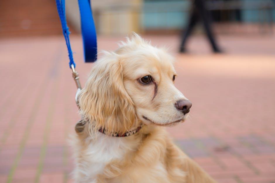 Собака в городе на поводке фото
