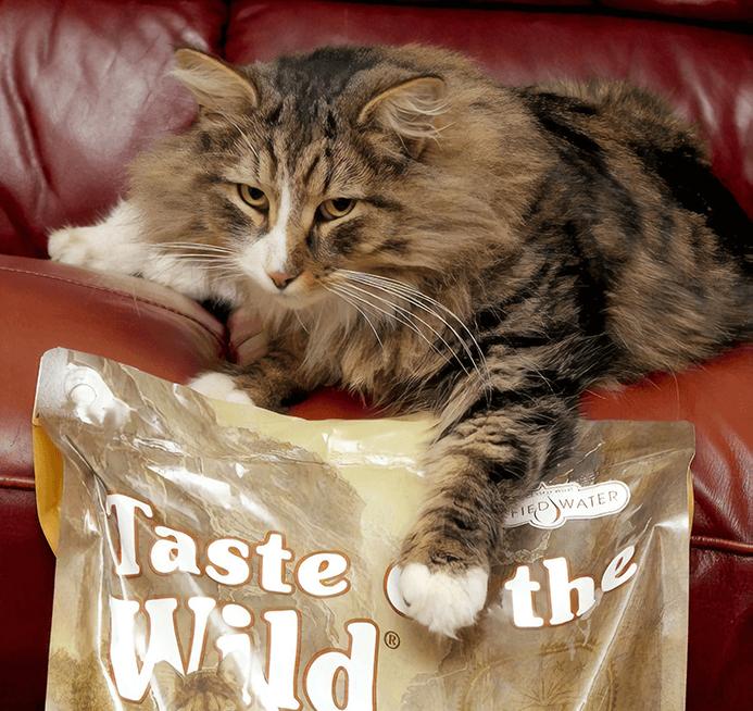 кот, кошка, питомец, норвежская лесная, корм