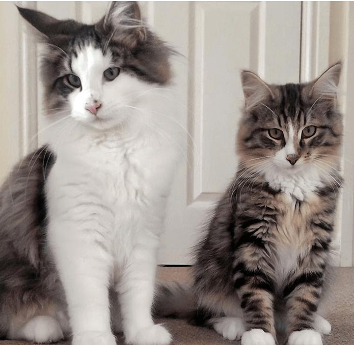 кот, кошка, брат
