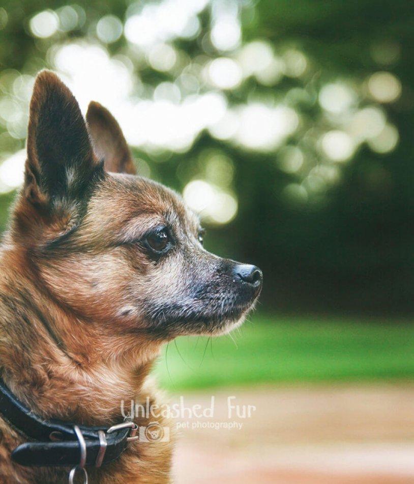собака, питомец, домашнее жиыотное