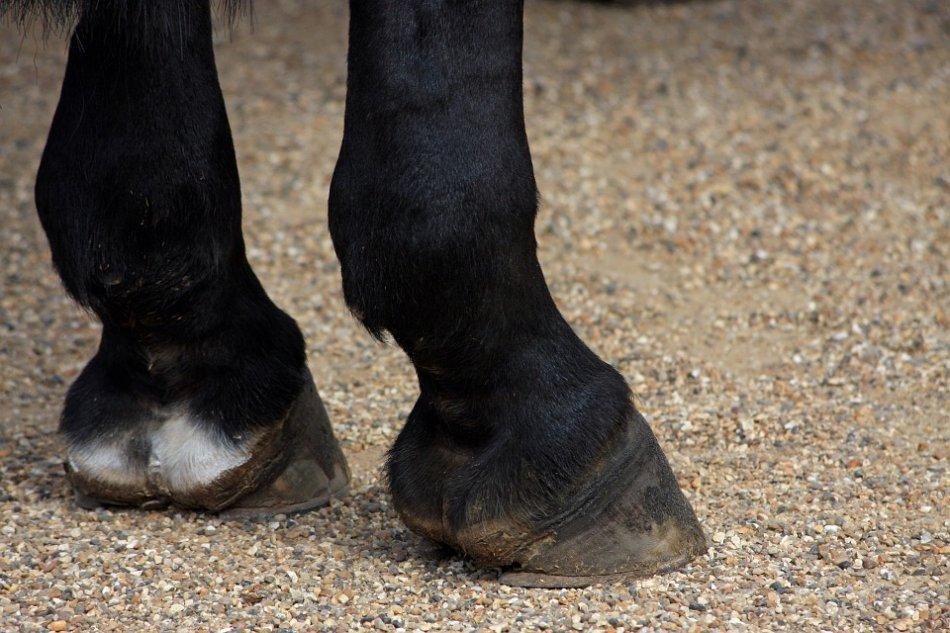 Копыта лошади крупным планом фото