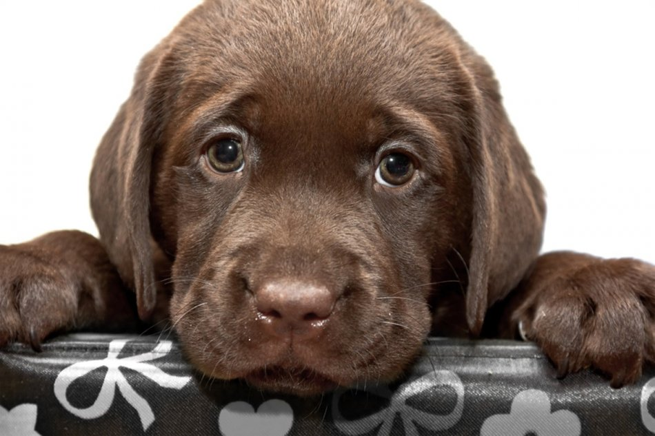 Грустный щенок в стрессе фото