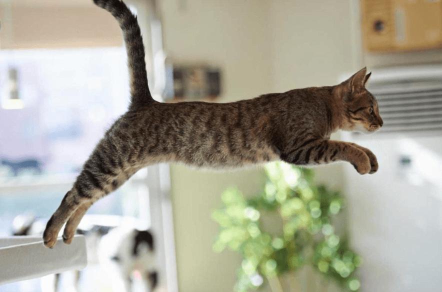 кошка, прыжок кошки, кот прыгает, коричневая кошка