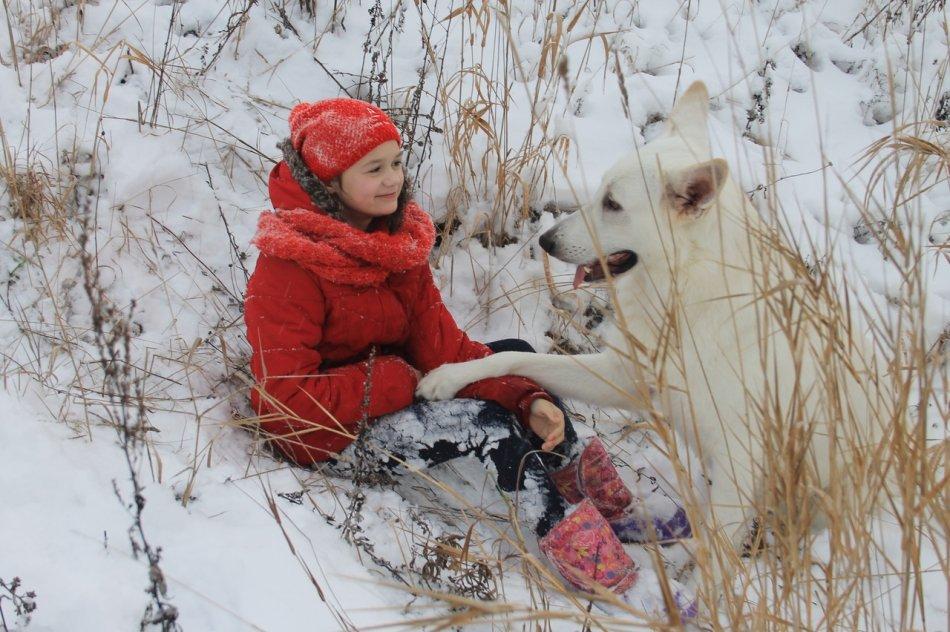 "Белая швейцарская овчарка и ребенок ""Красная шапочка"" фото"
