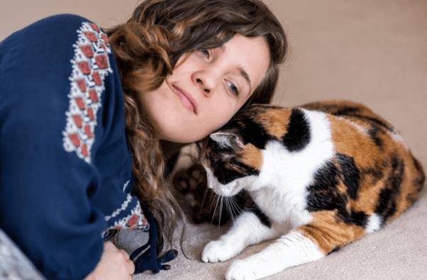 кошка, питомец, домашнее животное
