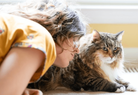 кот, домашний любимец, девушка и кошка