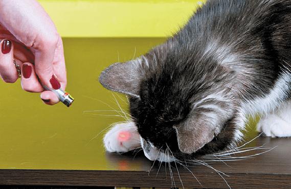 кот, домашний любимец, лазер, серый кот
