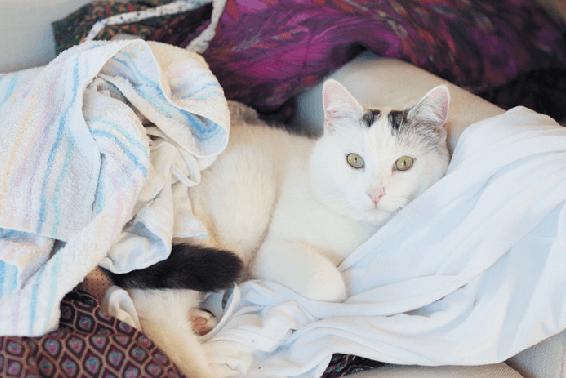 кот, кошка, кот на белье, кот лежит, белый кот