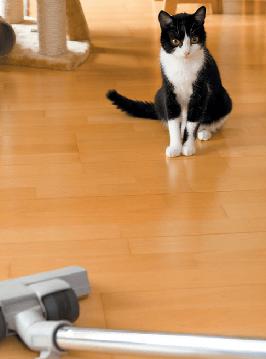 кот, пылесос, кот и пылесос, черный кот