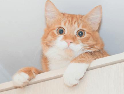 кошка, рыжий кот, кот на шкафу, домашний питомец