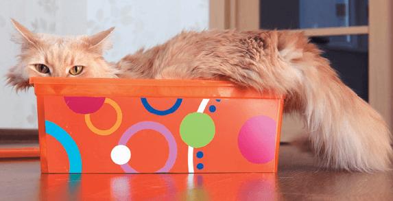 рыжий кот, кошка, кот в коробке, коробка