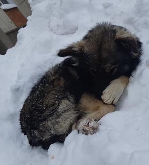 собака, щенок, собака в снегу