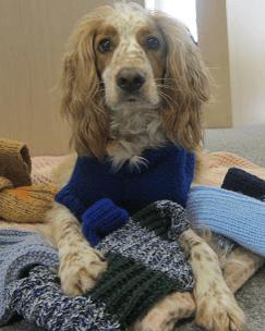 собака, собака в свитере, свитер для собаки