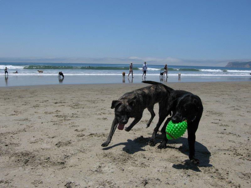 Две собаки играют на пляже фото