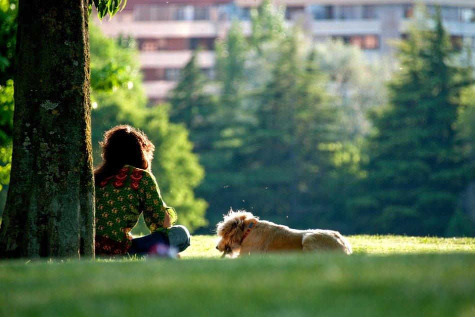 Собака и хозяйка отдыхают в парке на траве фото