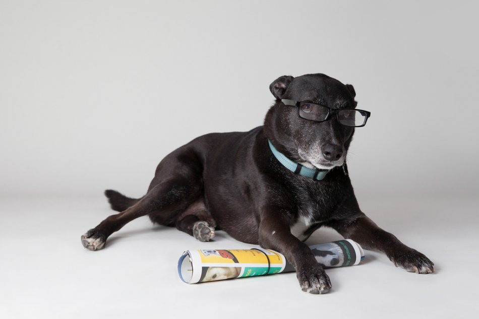 Собака в очках с газетой фото